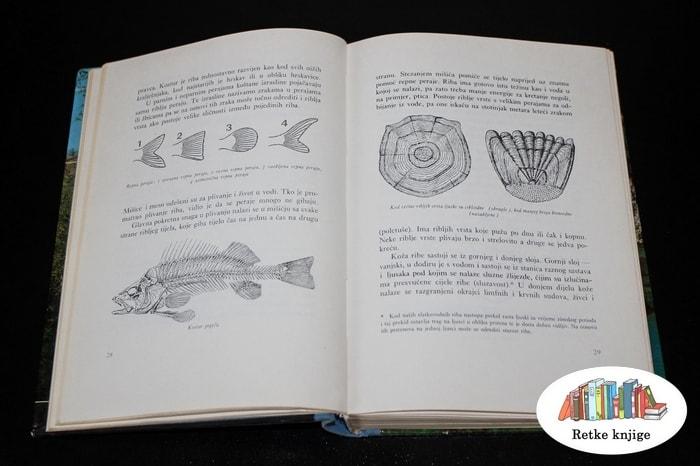 izgled riba