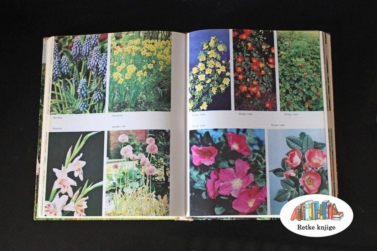 cveće za baštu
