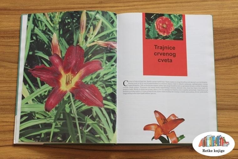 cvetovi crvene boje