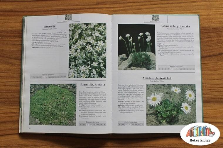 ukrasno bilje sa belim cvetovima