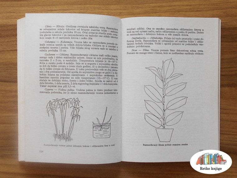 razmožavanje vodene palme