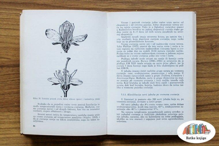 Prikaz cveta jabuke i dodatni tekst