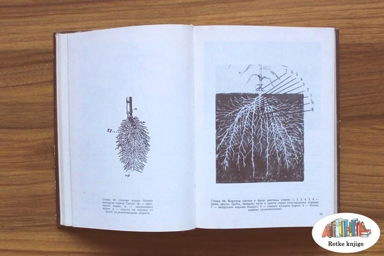 slike korenovog sistema i opis