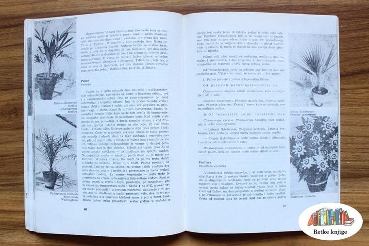 fotografije i opis vodenih palmi