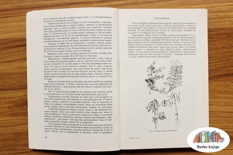 prikaz biljke grahorice sa opisom