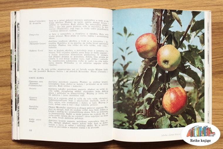 opis jabuka koje sorte imaju