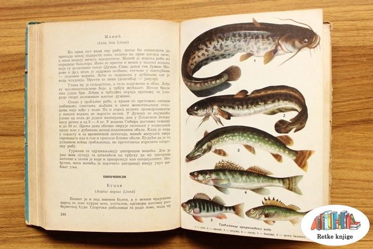 prikaz slatkovodnih riba grabljivica