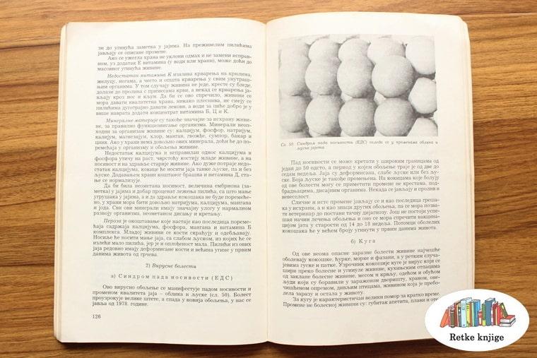 prikaz guščijih jaja