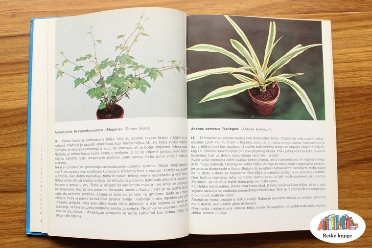 prikaz biljaka sobna lozica i ananas komosum