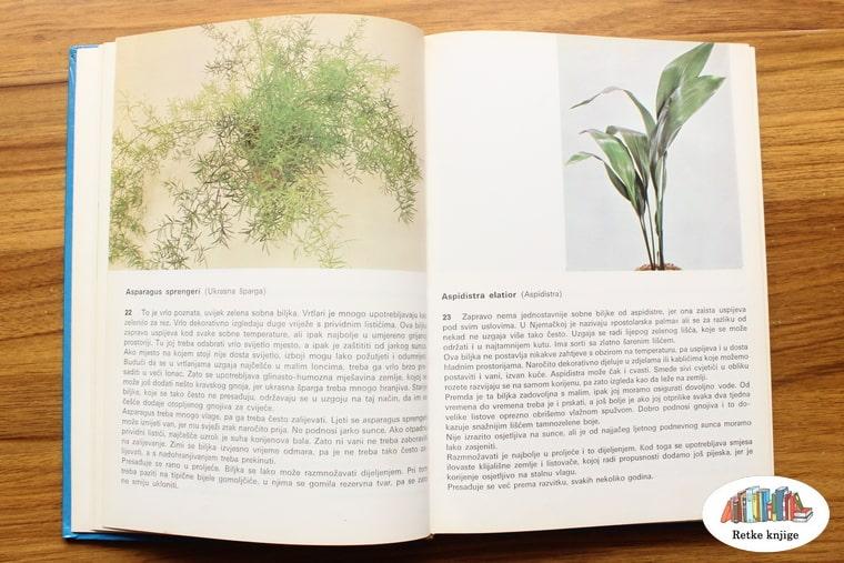 prikaz biljaka ukrasna šparga asparagus i aspidistra