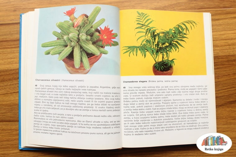 prikaz biljaka silvestri i brdska palma -sobna palma