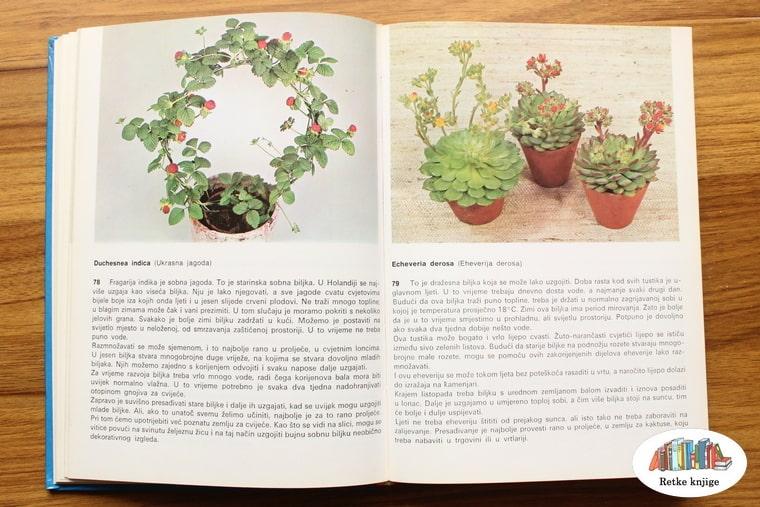 prikaz biljaka ukrasna jagoda i eheverija derosa