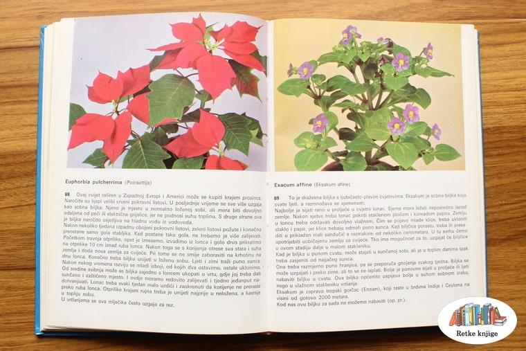 prikaz biljaka božićna zvezda i eksakum
