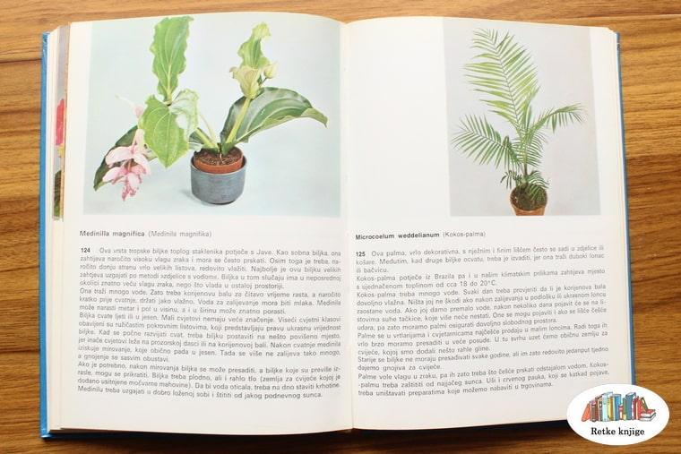 prikaz biljaka medinila i kokos palma