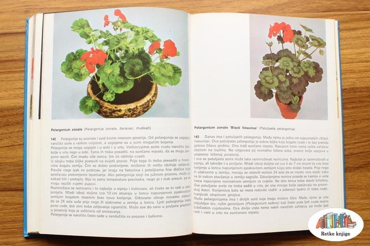 prikaz biljaka žeravac muškatla i patuljasta pelargonija