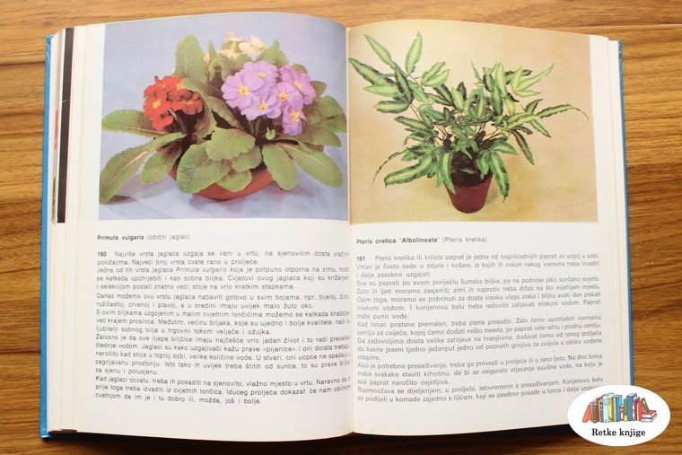 prikaz biljaka obični jaglac i pteris kretika
