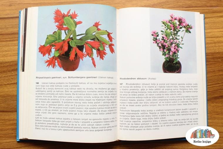 prikaz biljaka ukrasni kaktus i acaleja
