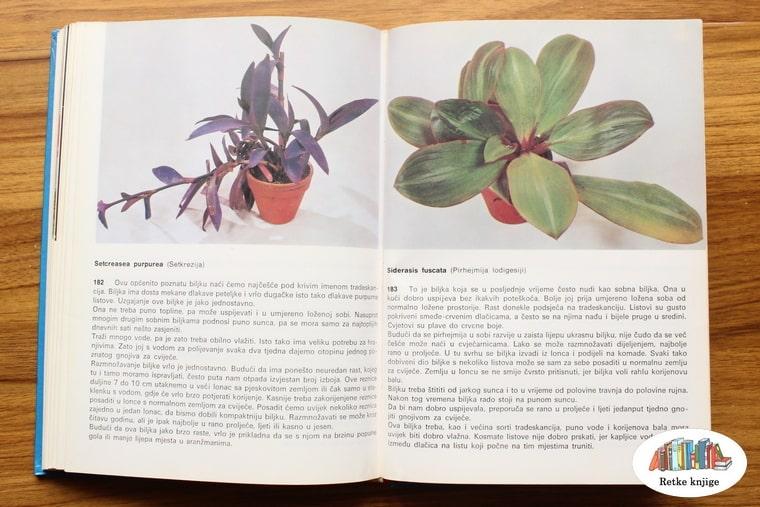 prikaz biljaka setkerezija i pirhejmija