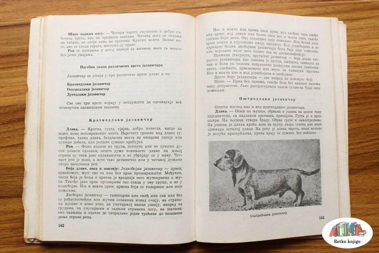 opis pasa jazavičara
