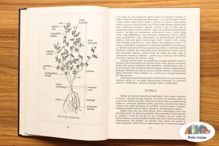 skica kako izgleda biljka sa opisom delova