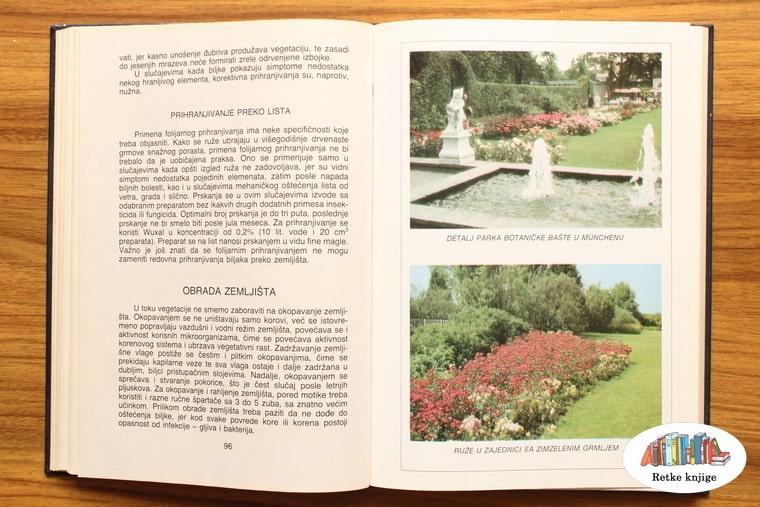 fotografije vrta sa ružama