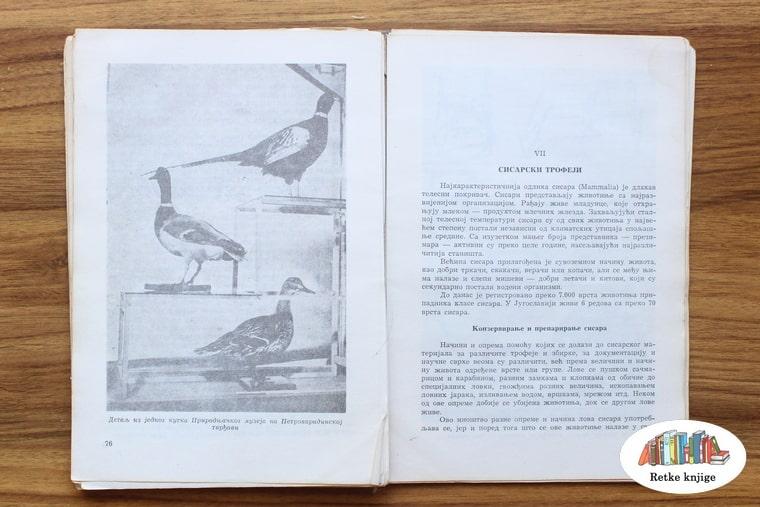 preparirane ptice u muzeju