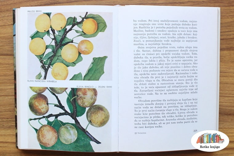 plodovi dženarika