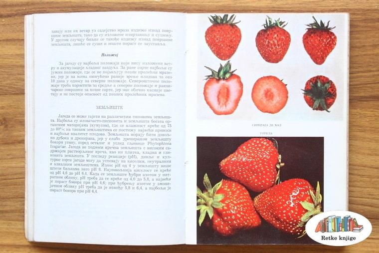 prikaz i opis plodova jagode