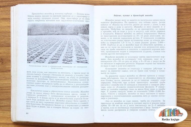 prikaz i opis zasada jagoda