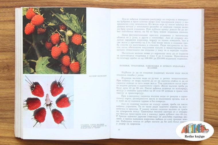 prikaz i opis plodova maline