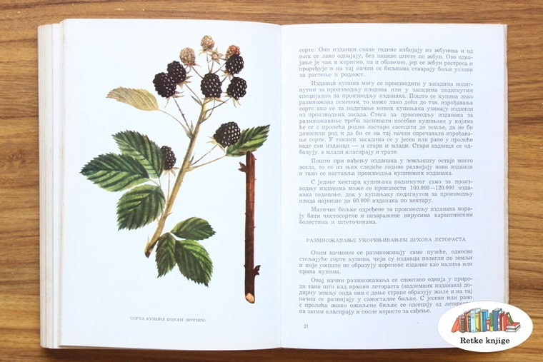 prikaz biljke kupine sa opisom