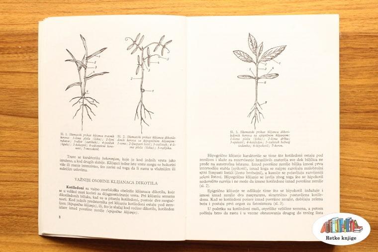 osnovni prikaz biljaka dok su mlade