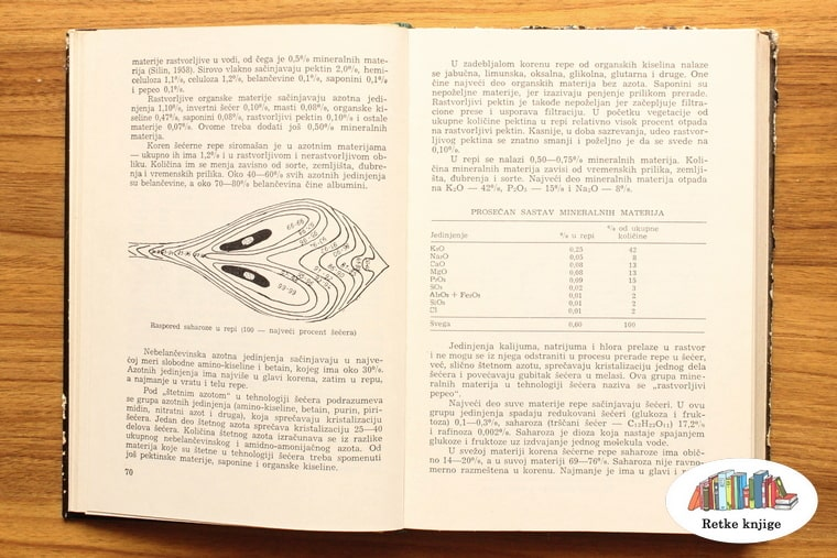 opis razvoja semena repe