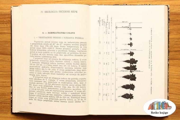 prikaz razvoja repe tokom godine