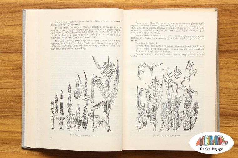 prikaz tipova i hibrida kukuruza