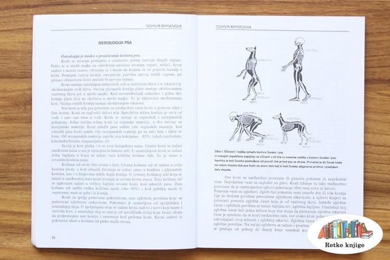 Prikaz kostiju kod pasa i poređenje sa čovekom