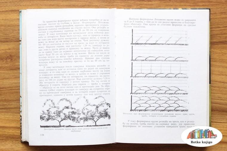 opis gajenja jabuke na nosačima - špalir