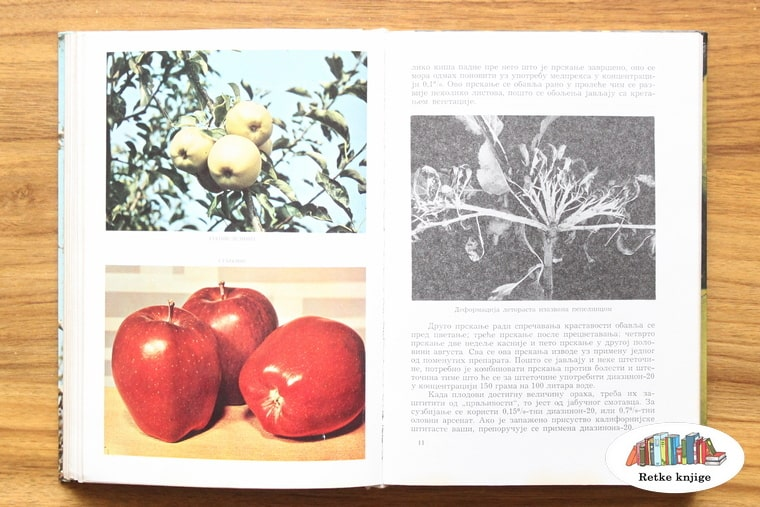 predtsavljanje sorti jabuka