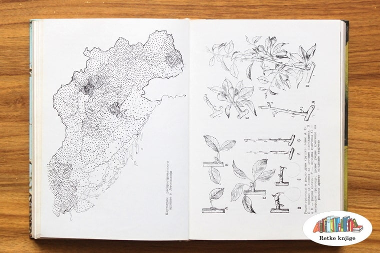 crteži o voćarskim rejonima u jugoslaviji