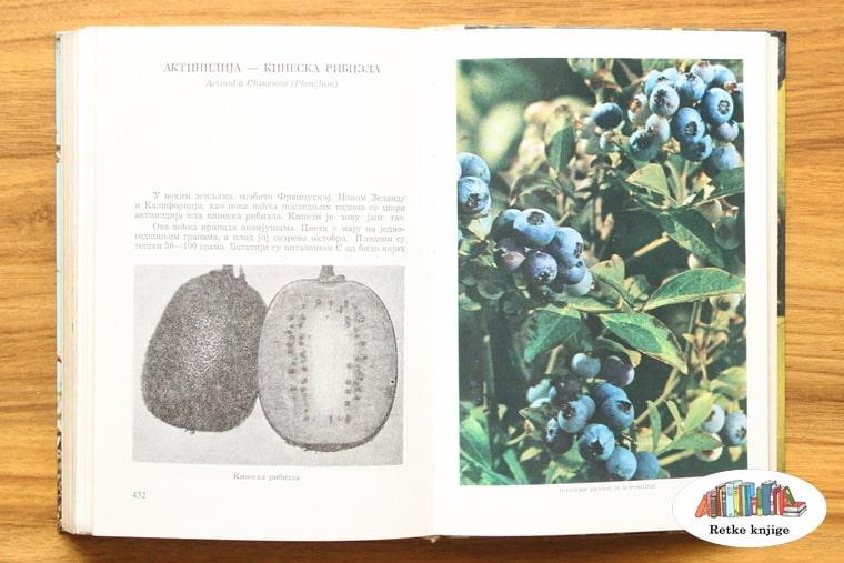 prikaz borovnica i opis njihove proizvodnje