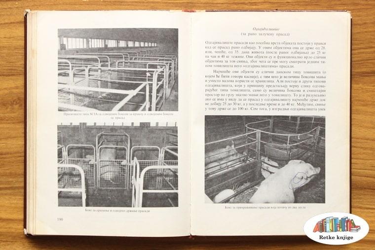 fotografije obora za svinje