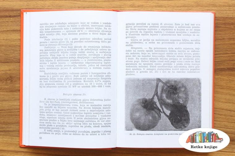 opis bolesti paradajza