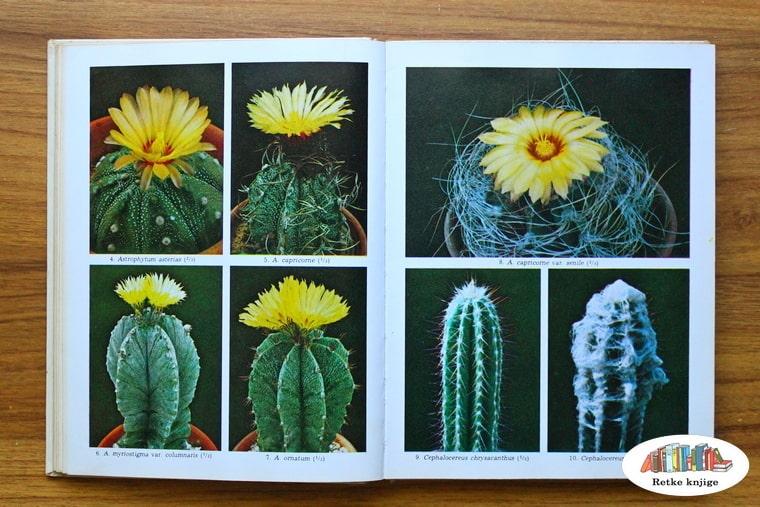 prikaz različitih kaktusa i njihovih cvetova