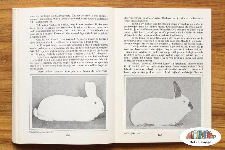 opis rasa zečeva