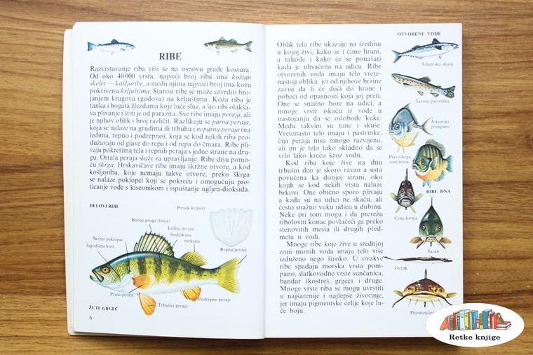 opis osnovnih stvari vezanih za ribe