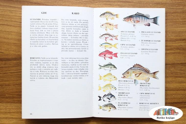 opis tropskih riba