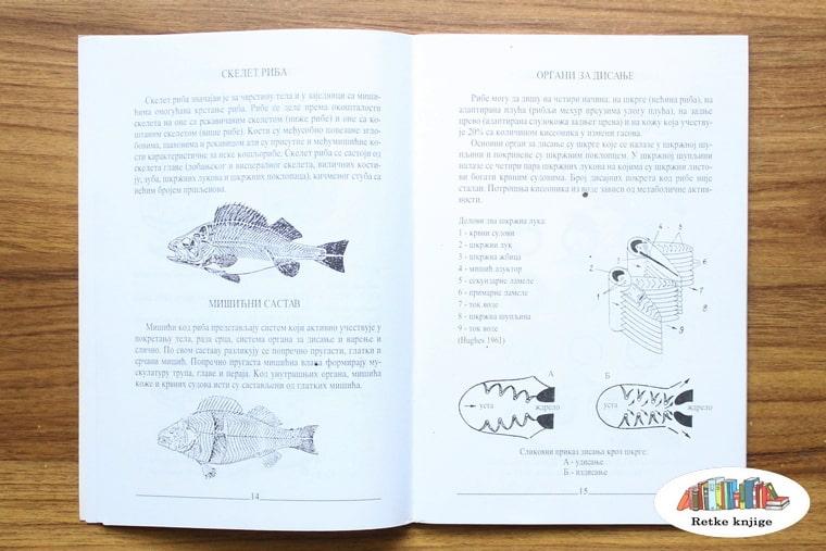 predstavljanje građe riba