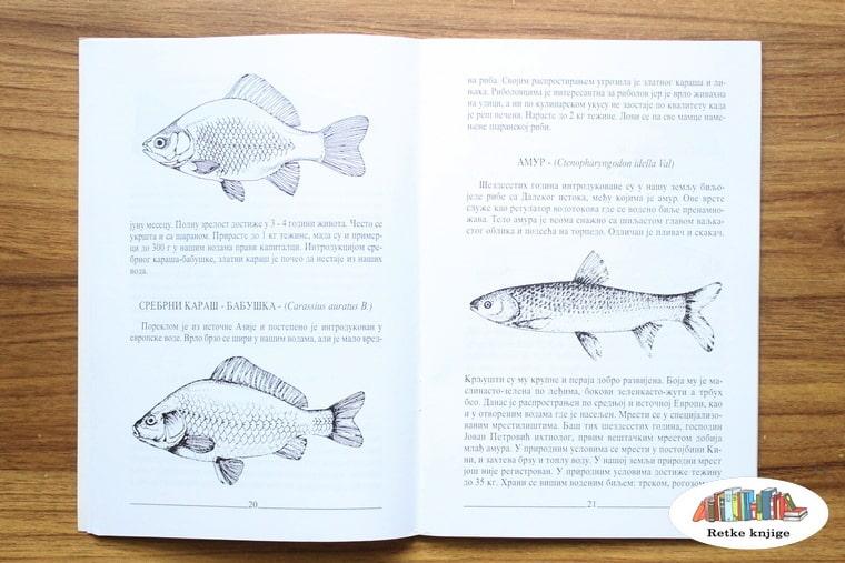 prikaz i opis šarana i amura