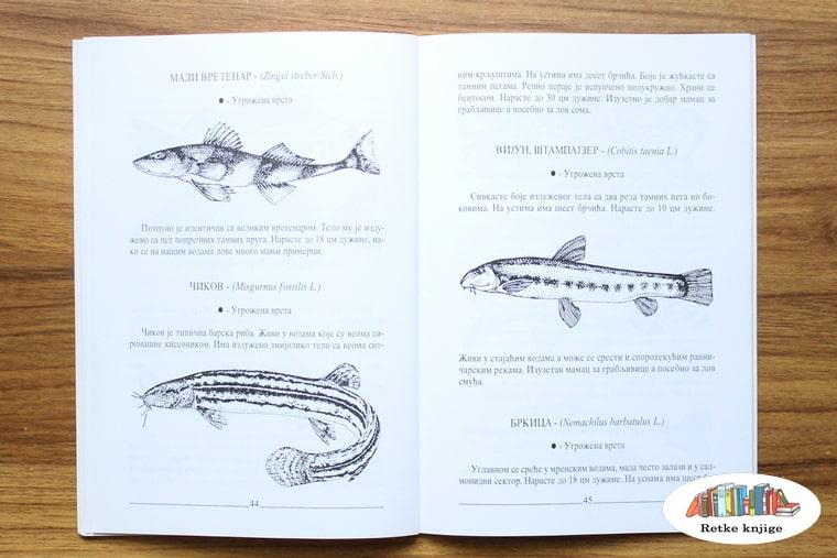 prikaz riba vretenar i vijun